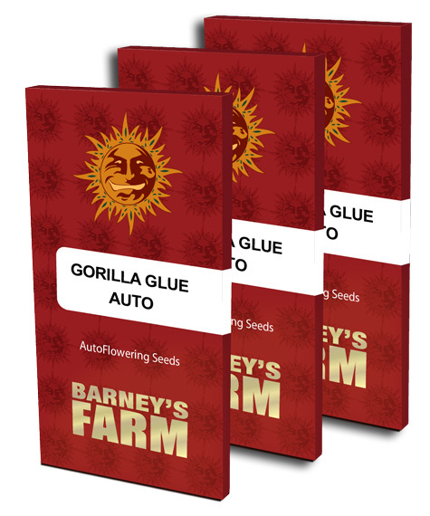 gorilla-glue-auto_green_light_district_