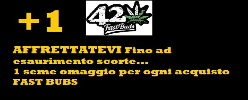 fast-buds-locandina_offerta_.jpg