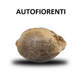 Semi Autofiorenti