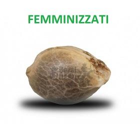 Semi Femminizzati