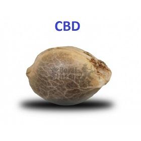 Semi Cbd