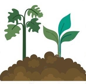 Fase Vegetativa